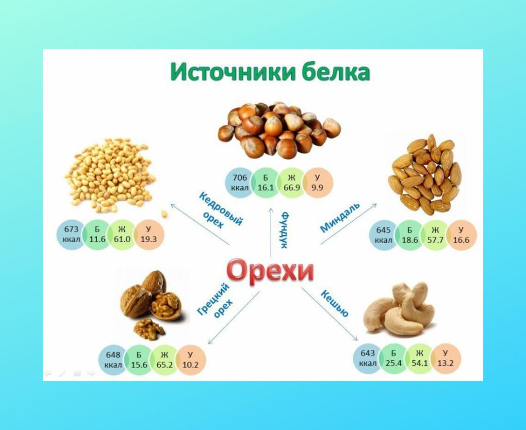 Орехи источники белка