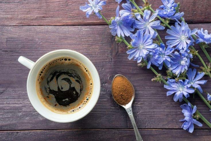 Цикорий- растение, молотый, напиток