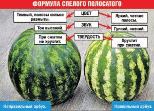Формула спелого арбуза