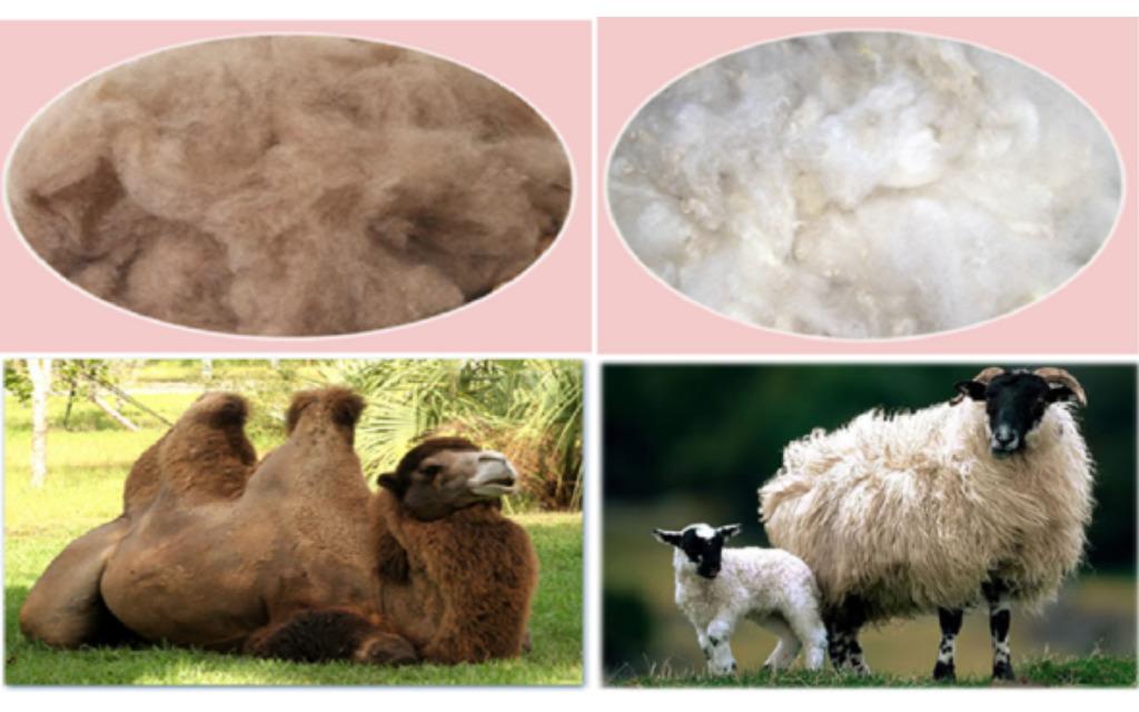 Верблюжья и овечья шерсть